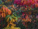 Thumbnail Beautiful Fall Leaves