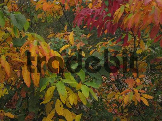 Product picture Colorful Fall Leaves